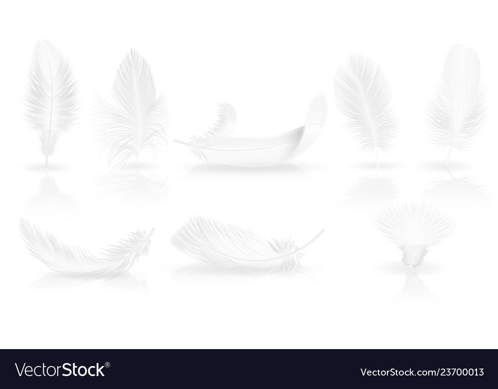 Realistic soft white feathers on glossy background