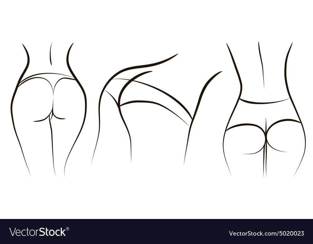 Ass vector image