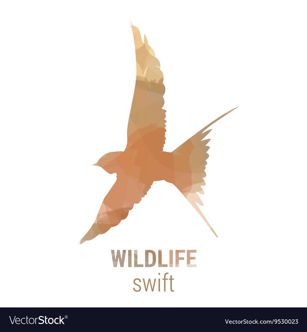 Wildlife banner - bird swift vector image