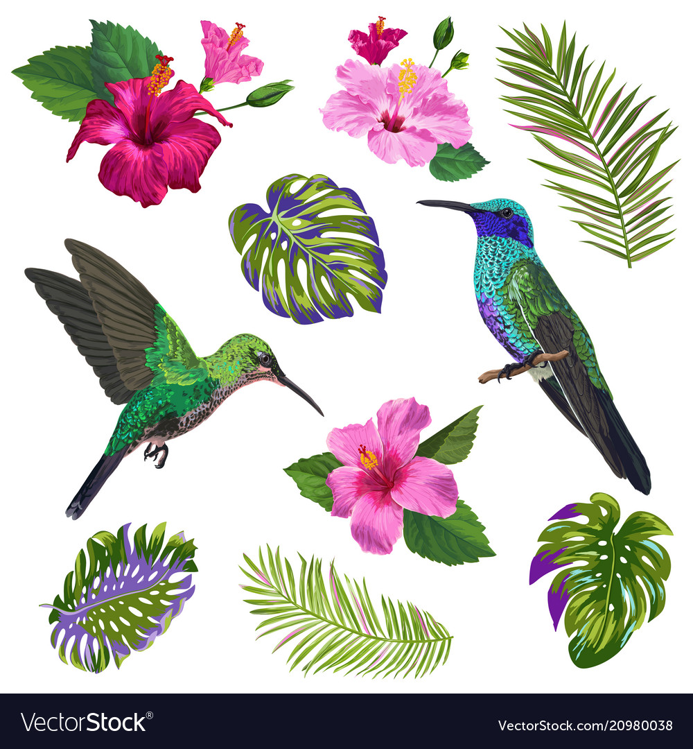 Hummingbird with tropical flowers