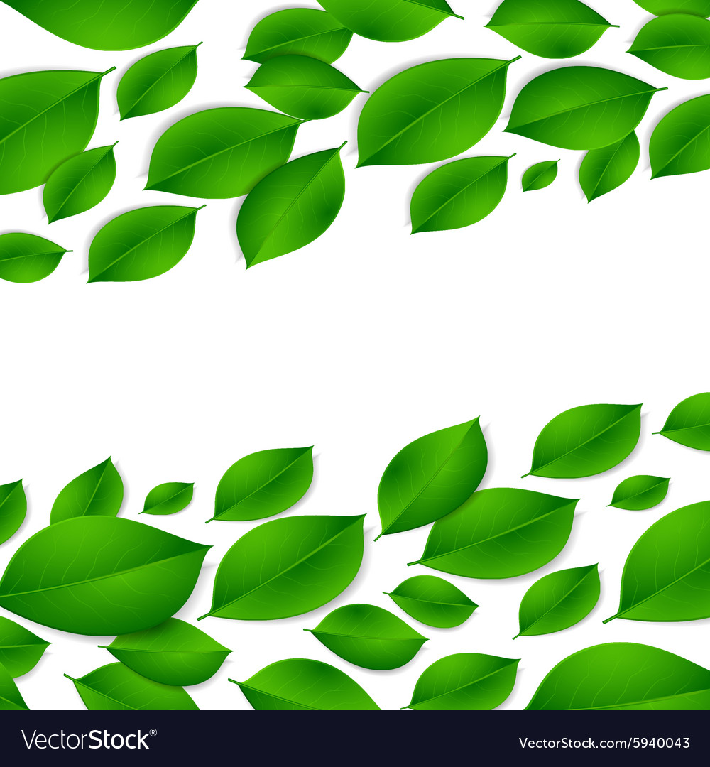Realistic green leaves isolated texture on white