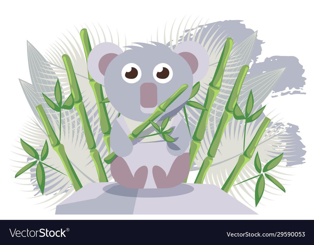 Koala australian animal cute cartoon character