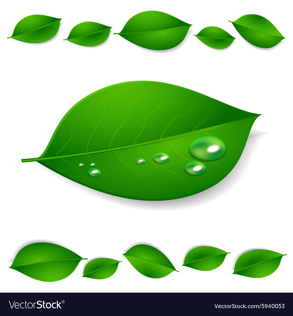 Realistic green leaves with water drops isolated