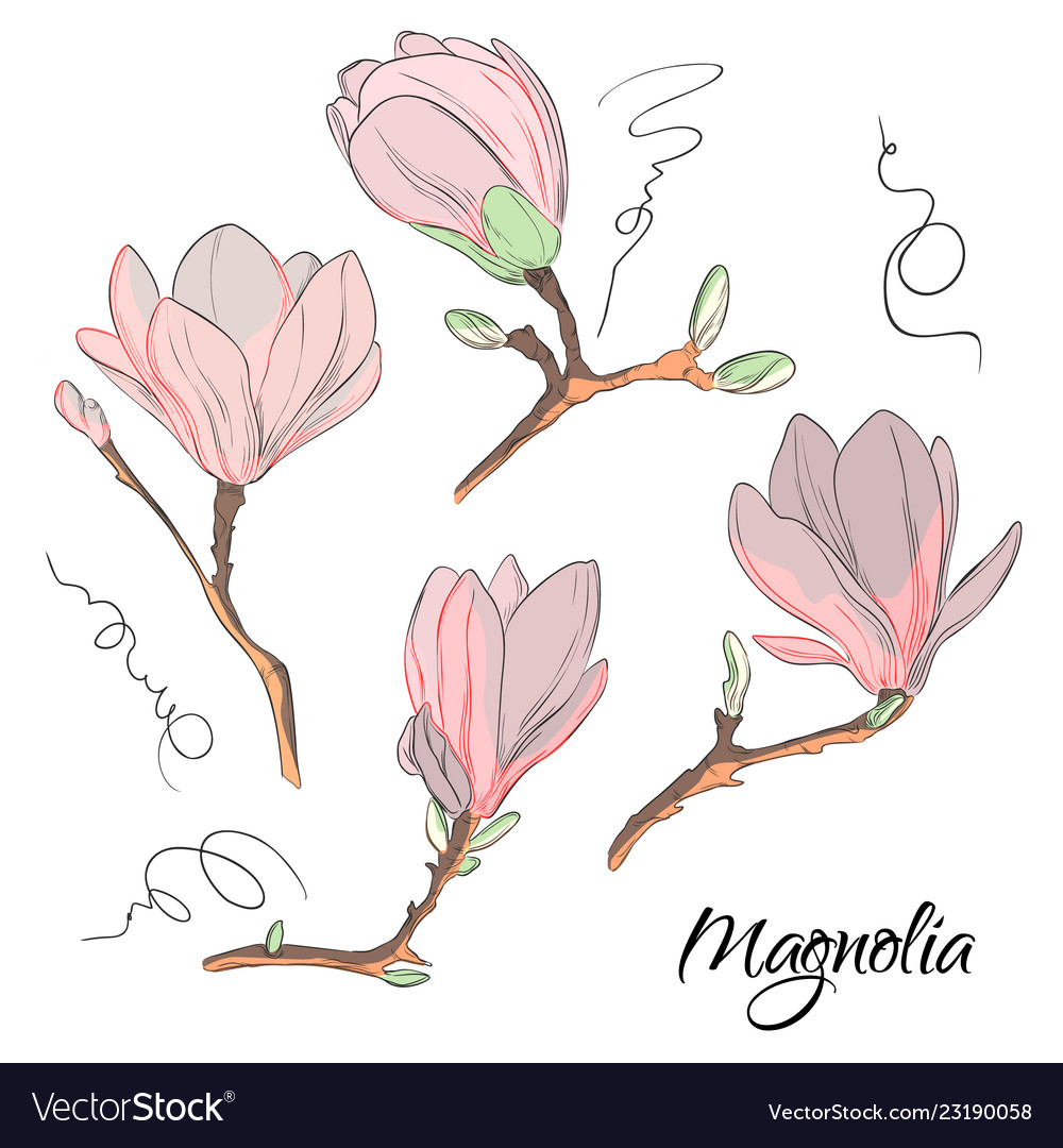 Magnolia flower sketch repeat botanical floral