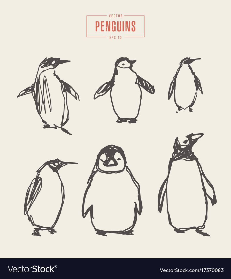 Set penguins hand drawn sketch vector image