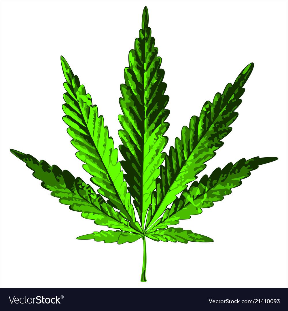 Green hemp leaf