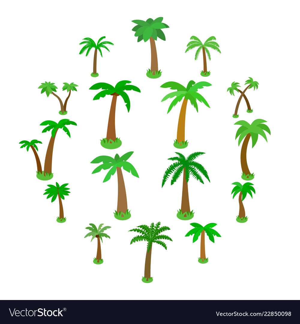 Palm tree icons set isometric 3d style