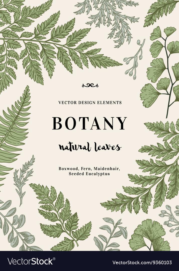 Botanical with leaves boxwood