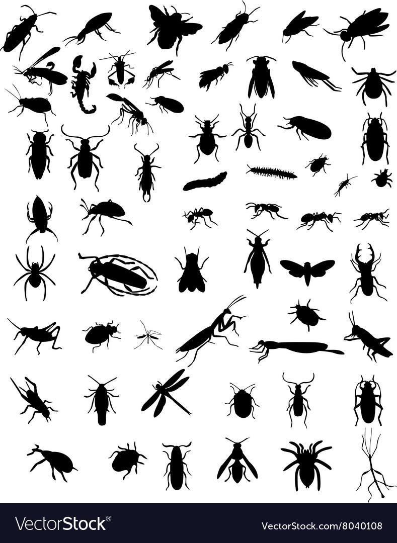 Bugs 3 vector image