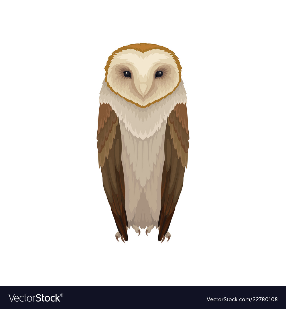 Image of: Whet Owl Vectorstock Flat Icon Of Barn Owl Nocturnal Bird With Vector Image