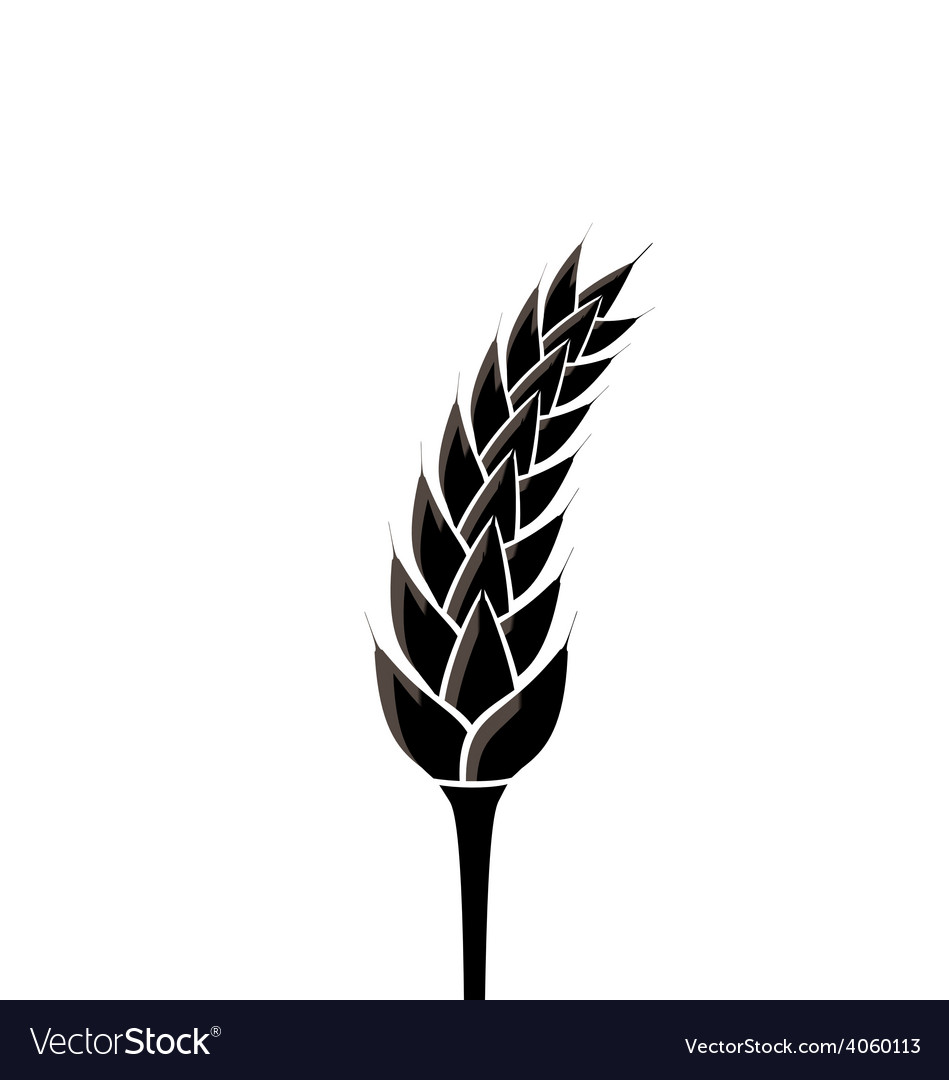 Black silhouette of spikelet of wheat isolated on vector image