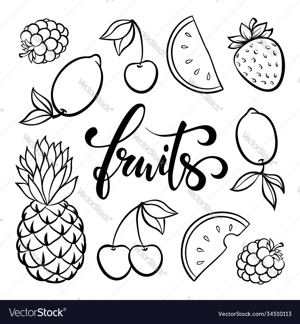Fruit symbols doodle outline drawing tropical vector