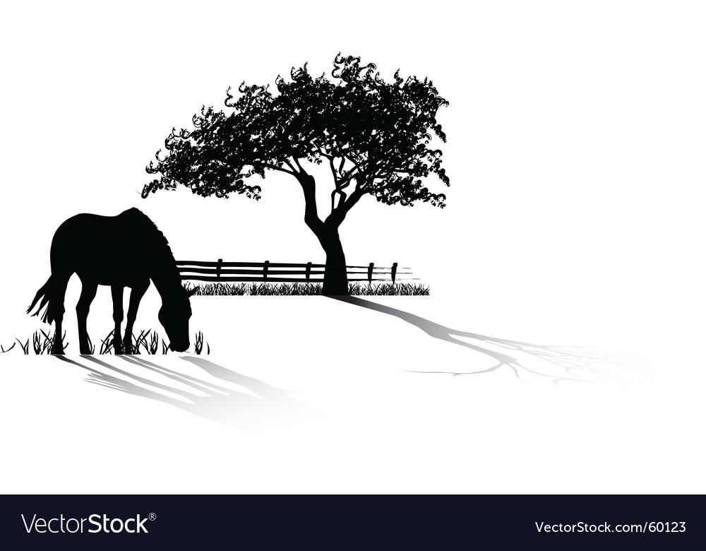 Horse grazing vector image