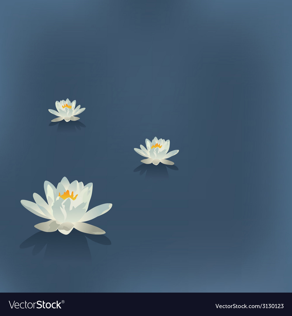 Three flowers of a lily in the lake on a blue vector image izmirmasajfo