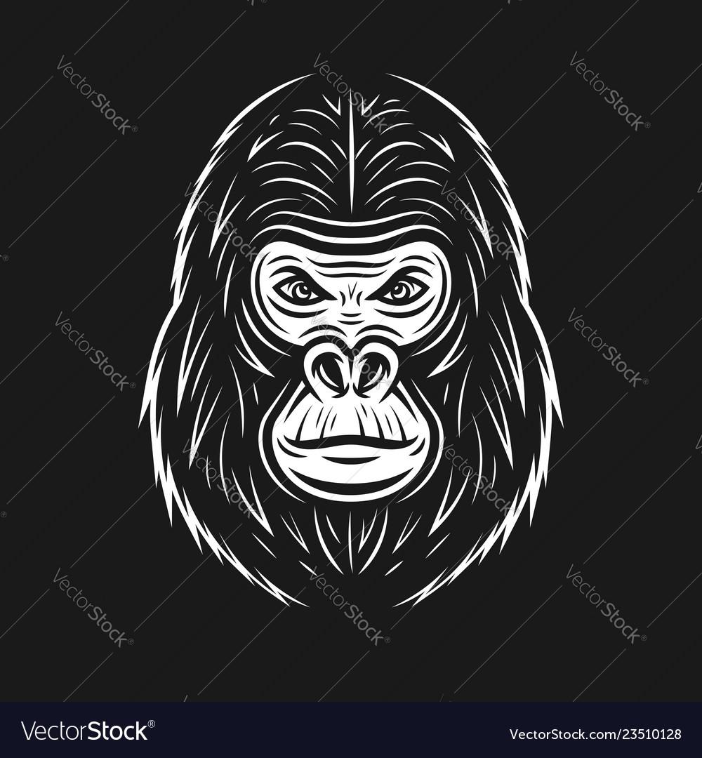 Gorilla face on dark backdrop