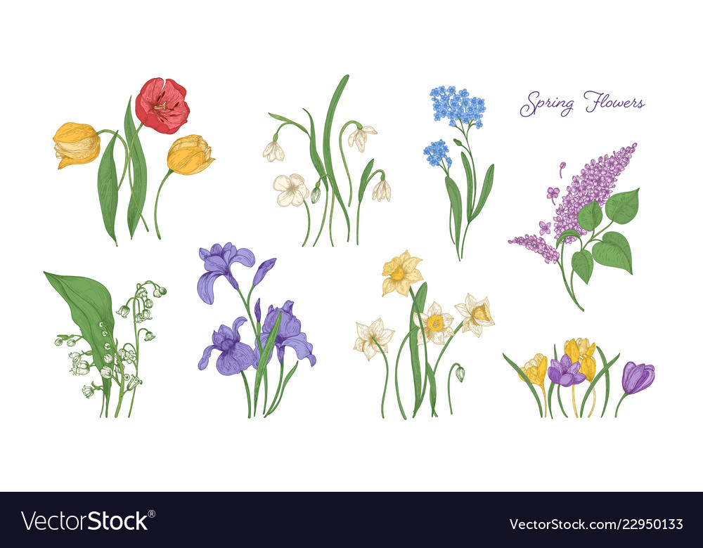 Bundle of natural drawings of spring flowers