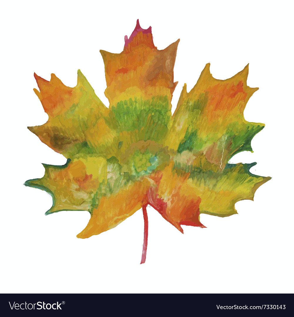 Maple leaf painted in watercolor