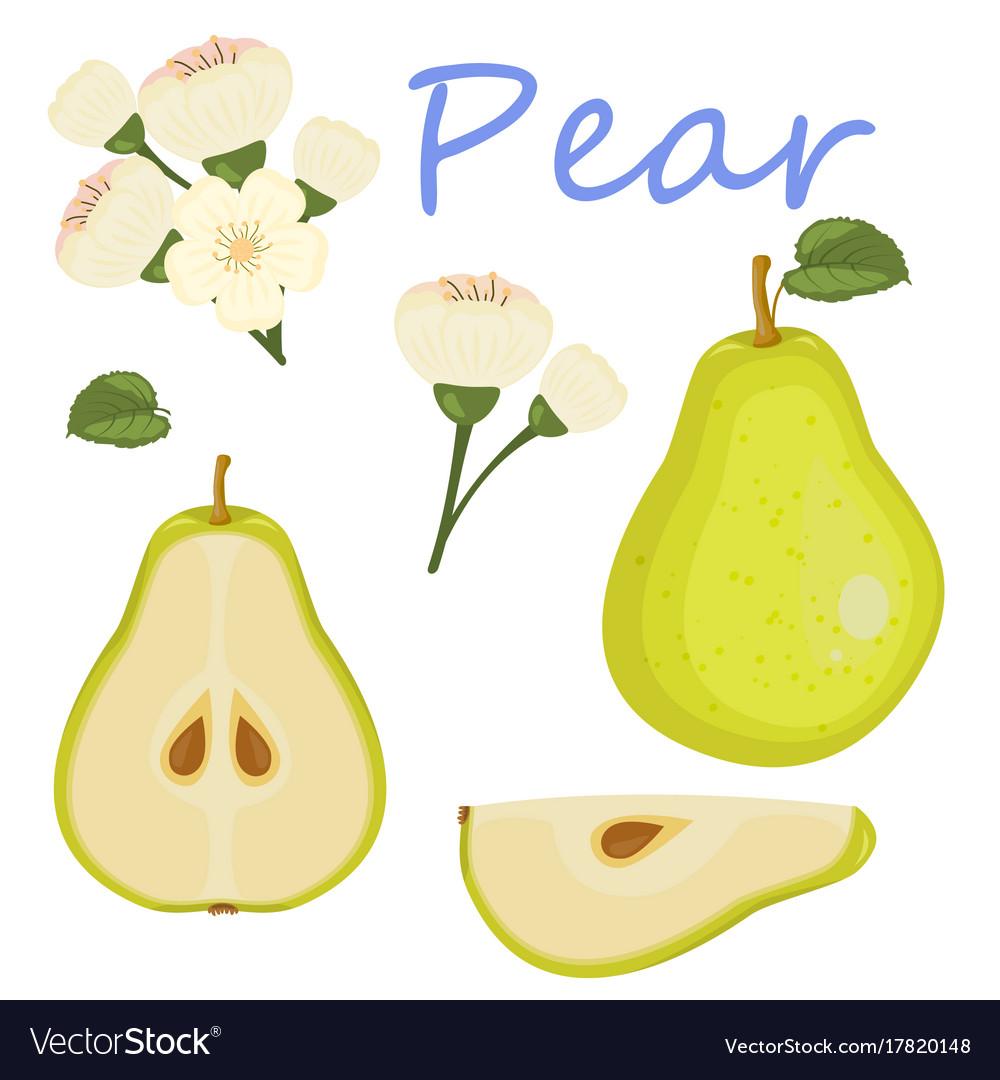 Fresh pear icon green pear