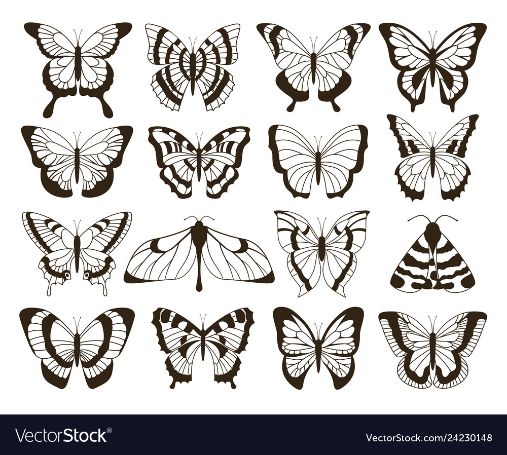Monochrome butterflies black and white drawing