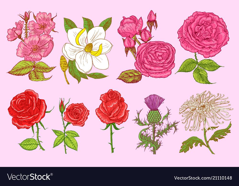 Set wedding botanical flowers in garden or