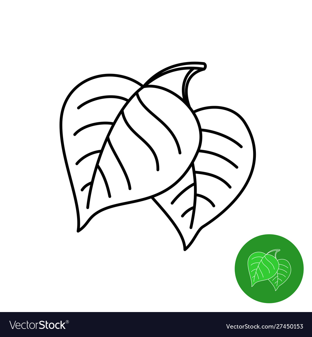 Birch leaves line icon simple elegant style two