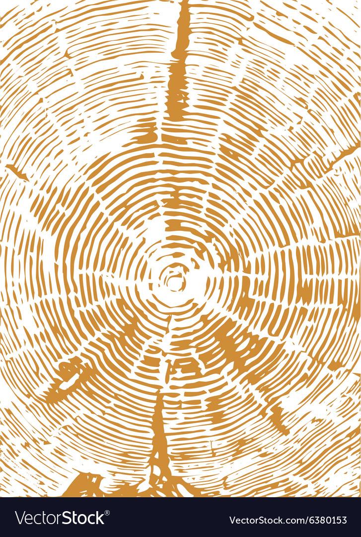 Cross section of tree stump vector image
