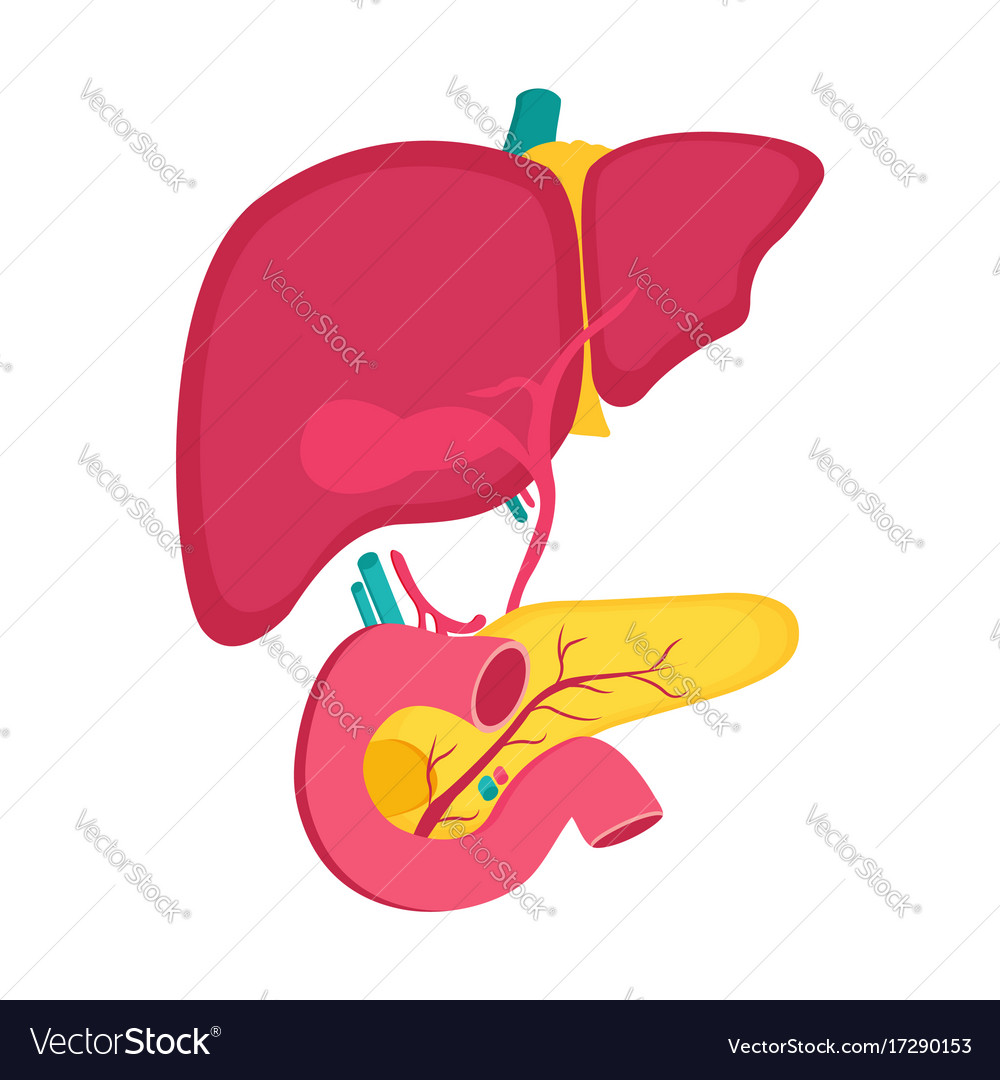 Educational Medical Poster With Pancreas And Liver