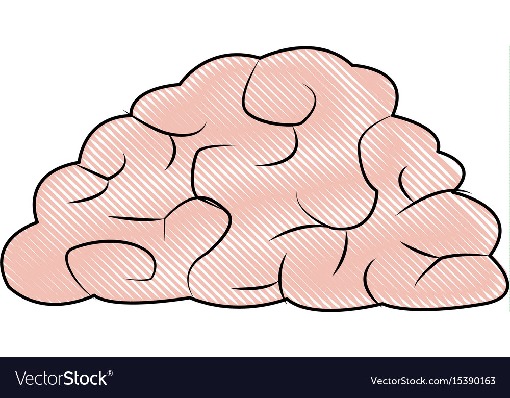 Human brain organ health memory anatomy Royalty Free Vector