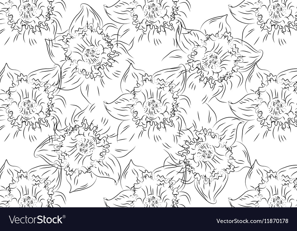 Flower Hand drawn sketch tutsan hypericum