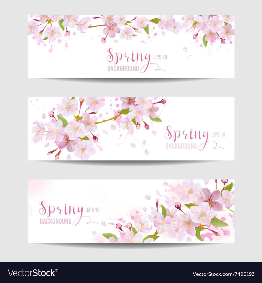 Spring Flower Banner Set Cherry Blossom Tree Vector Image