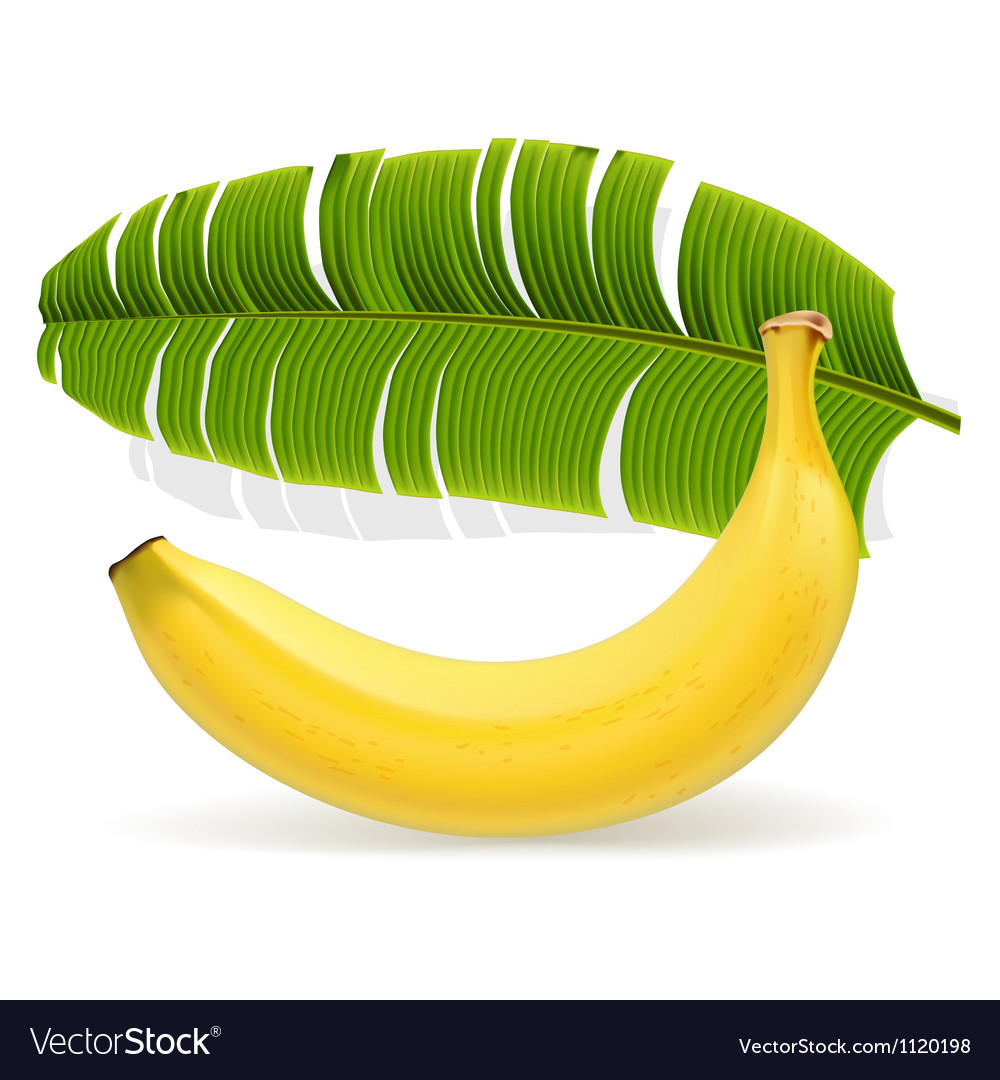 Ripe yellow banana with leaf
