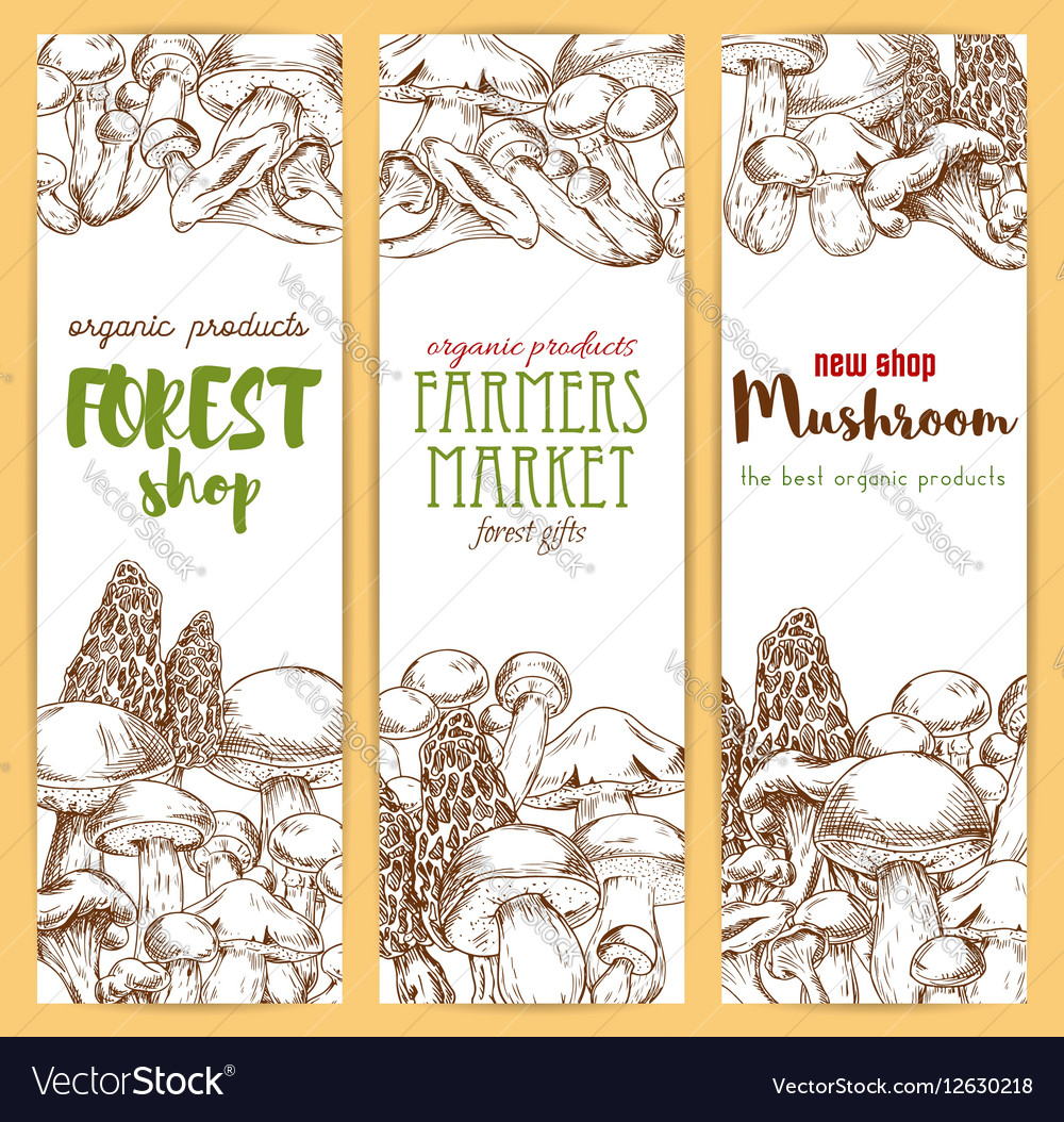 Mushrooms sketch banners set