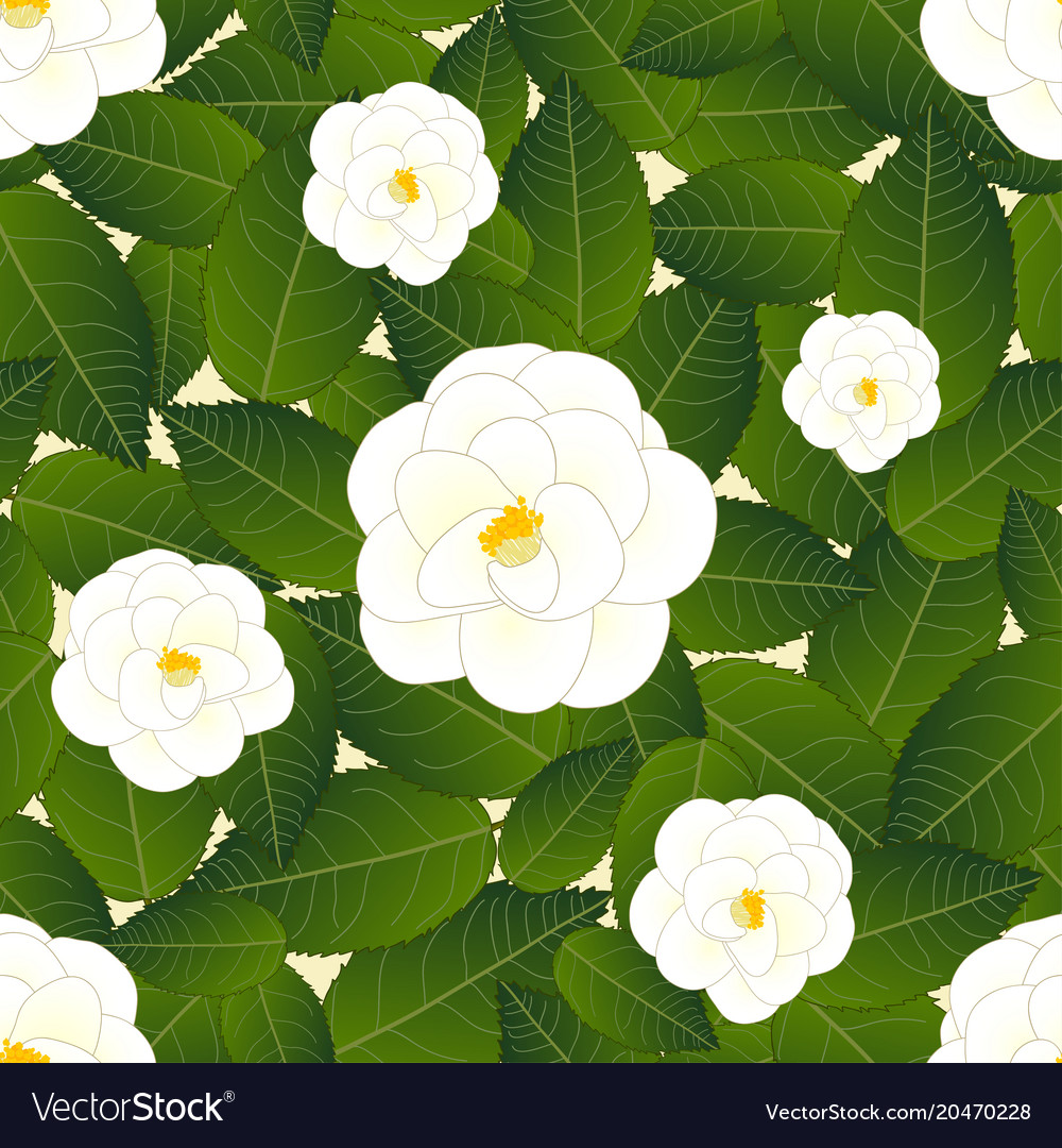 White Camellia Flower On Ivory Beige Background Vector Image