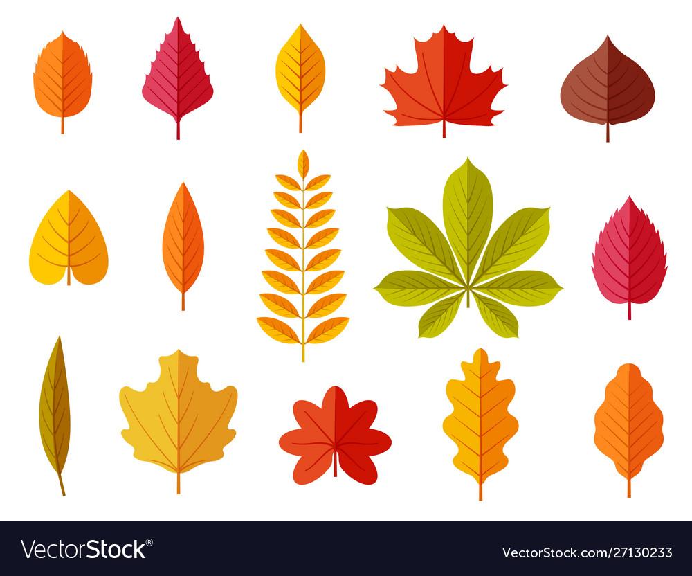 Fall leaves colorful autumn leaves leaf chestnut
