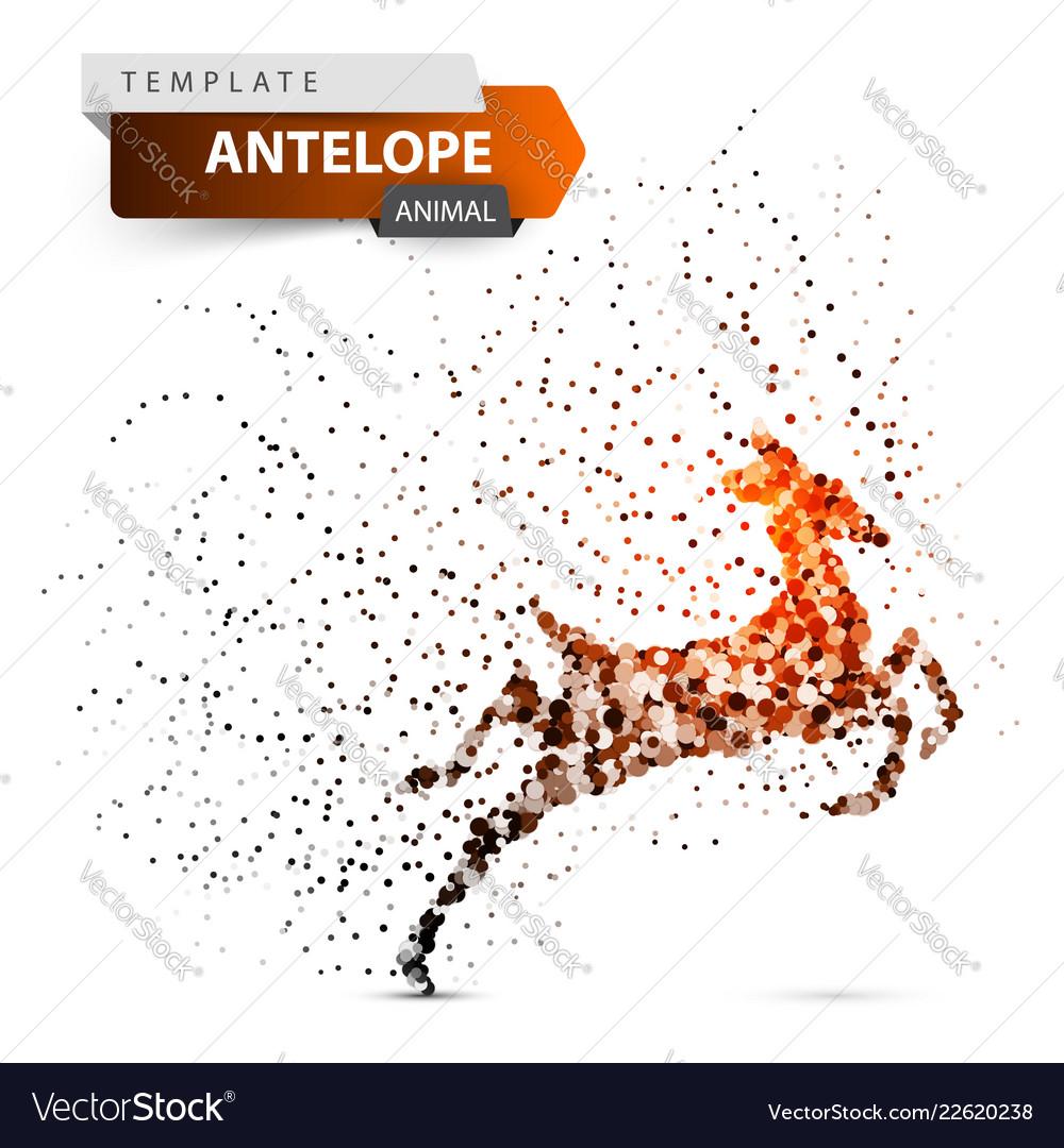 Antelope duiker hartebeest deer gazelle dot