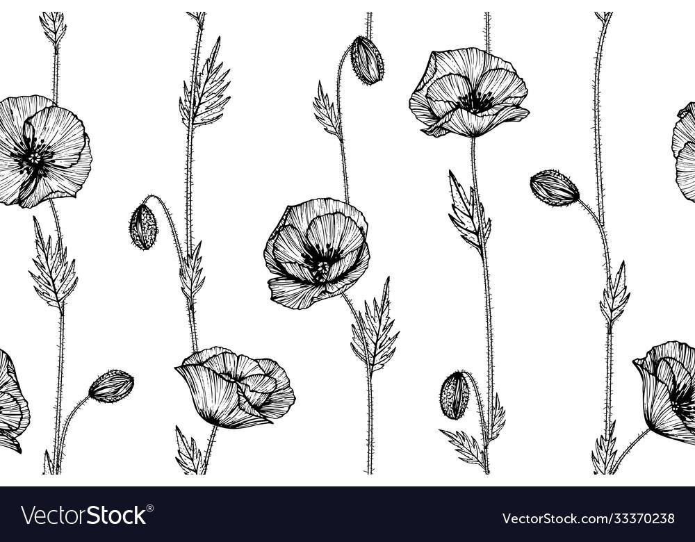 Poppy flower and leaf hand drawn botanical