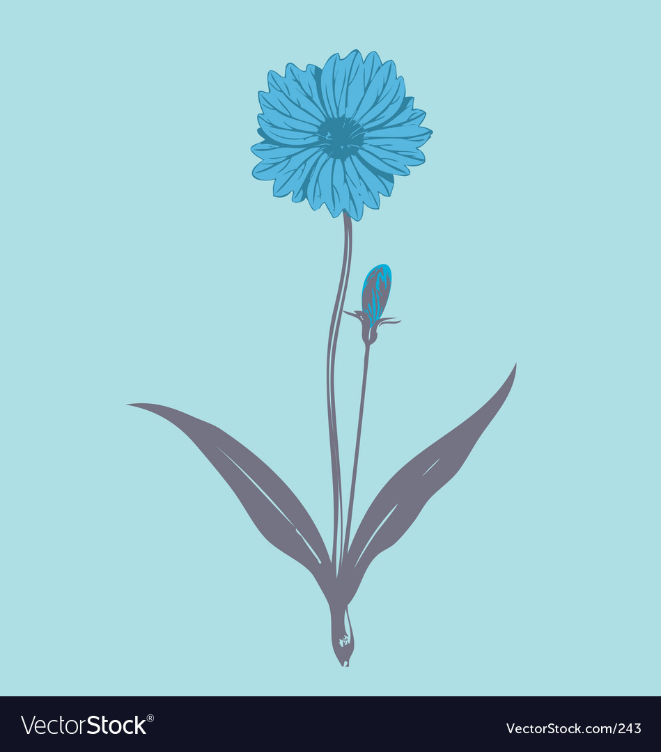 Flower illustration vector image