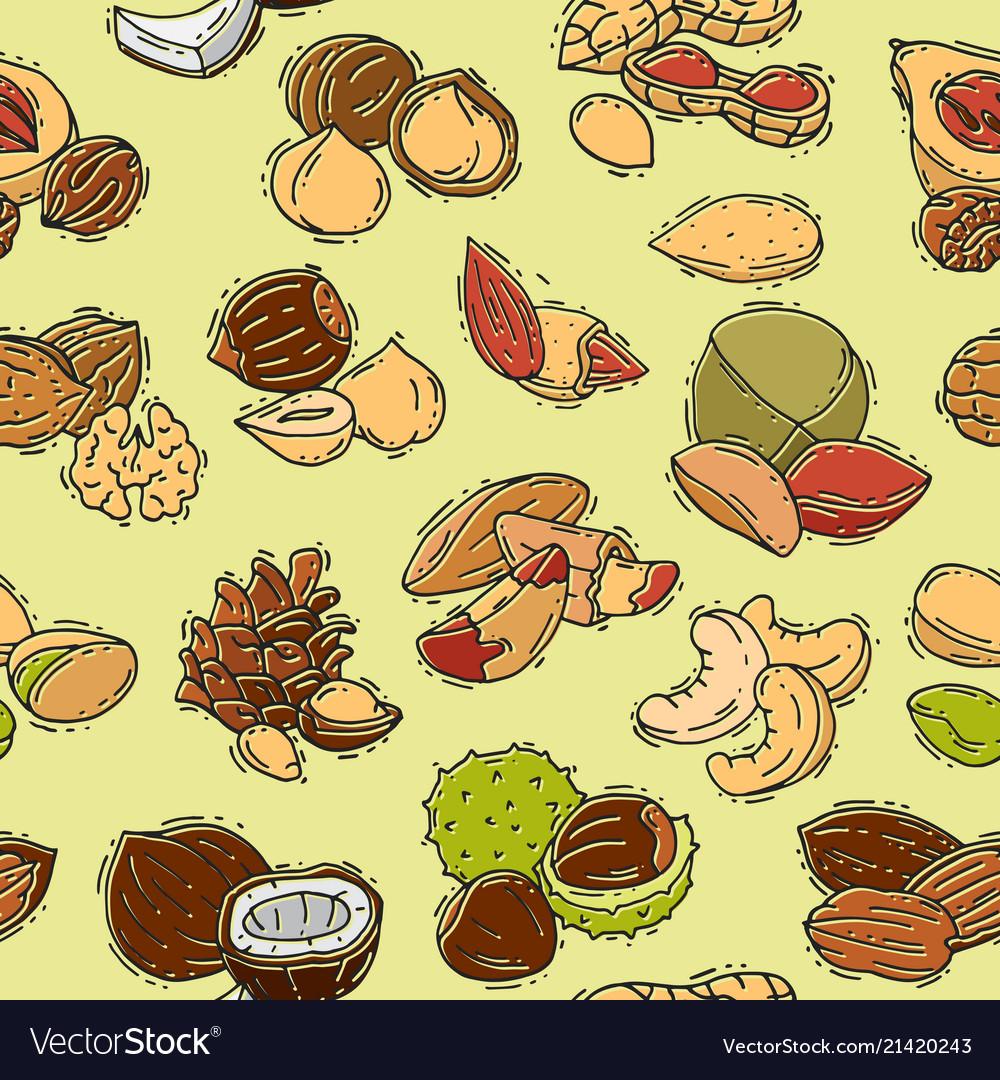 Nuts nutshell of hazelnut almond and walnut