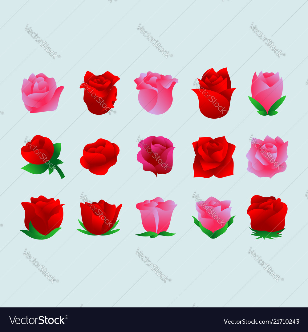 Rose flower set