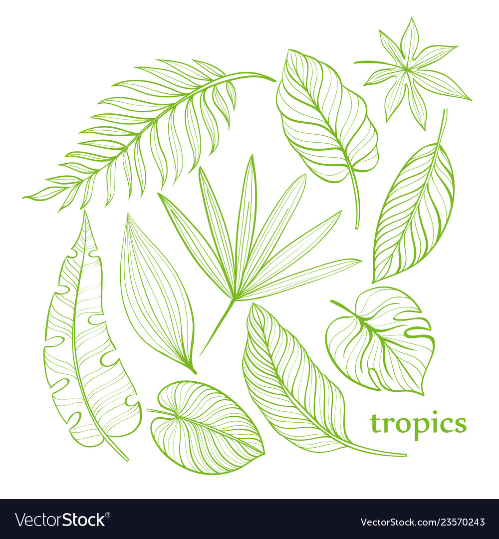 Set Tropical Leaves Line Drawing Hand Drawn Vector Image Search more hd transparent tropical leaves image on kindpng. https www vectorstock com royalty free vector set tropical leaves line drawing hand drawn vector 23570243