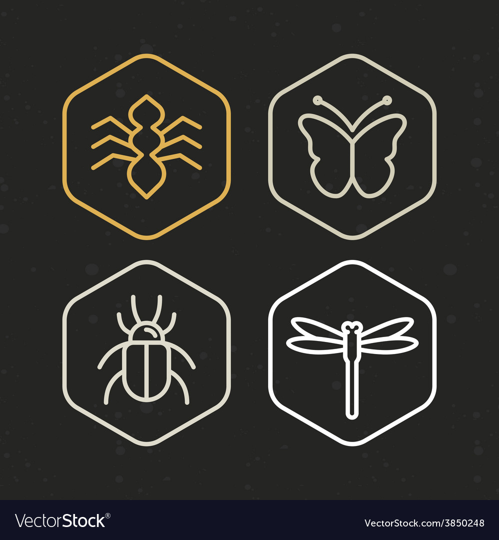 Insect icons in line style