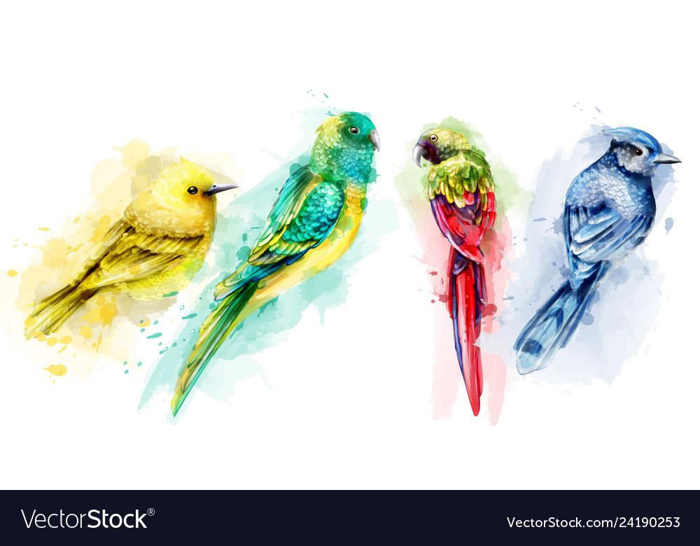Colorful tropic birds watercolor beautiful