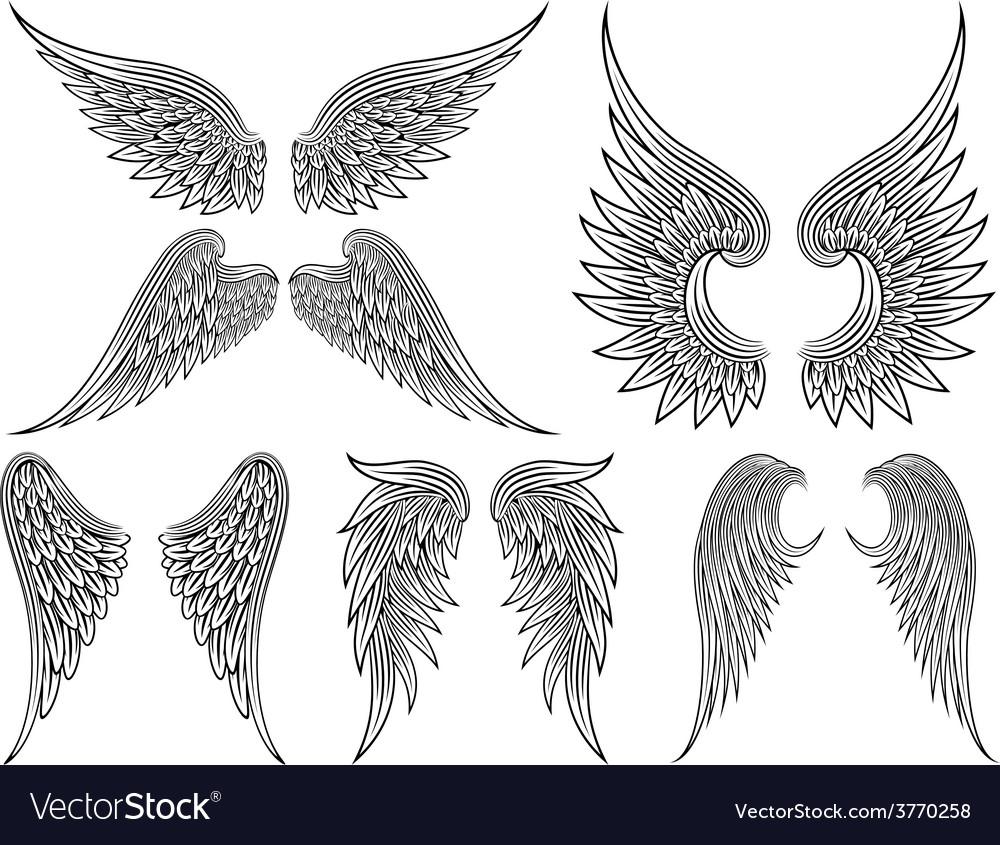 Heraldic wings or angel vector image