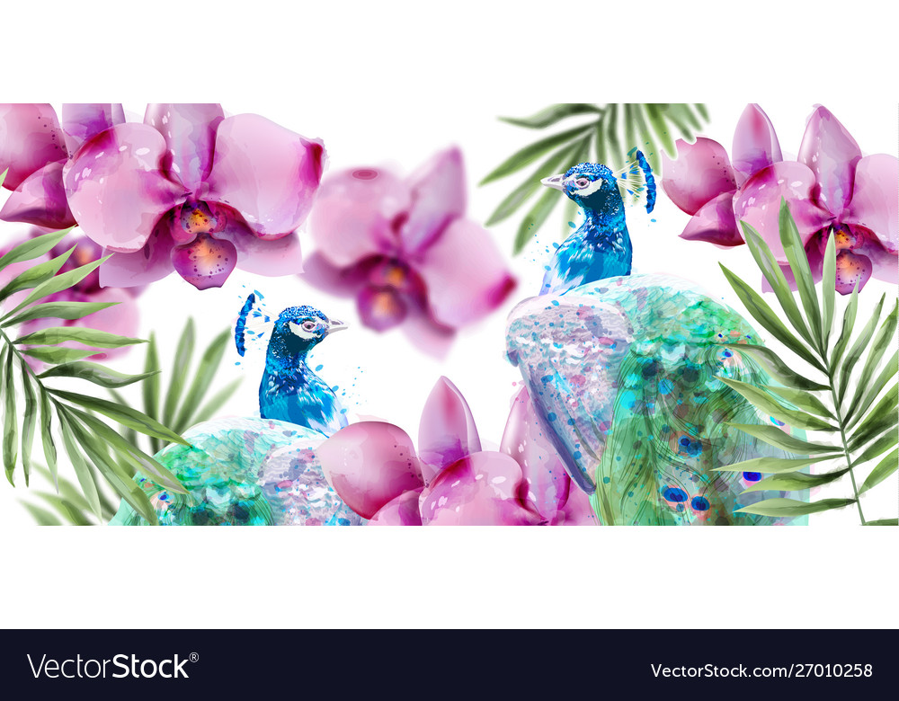 Peacock and orchid flowers watercolor summer