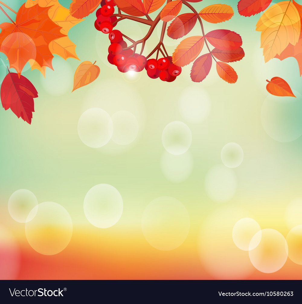 Autumn background with colorful leaves and rowan