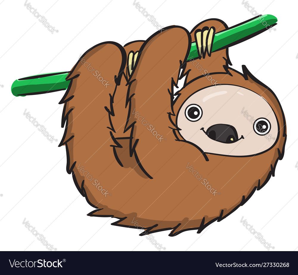 Sleeping sloth on white background