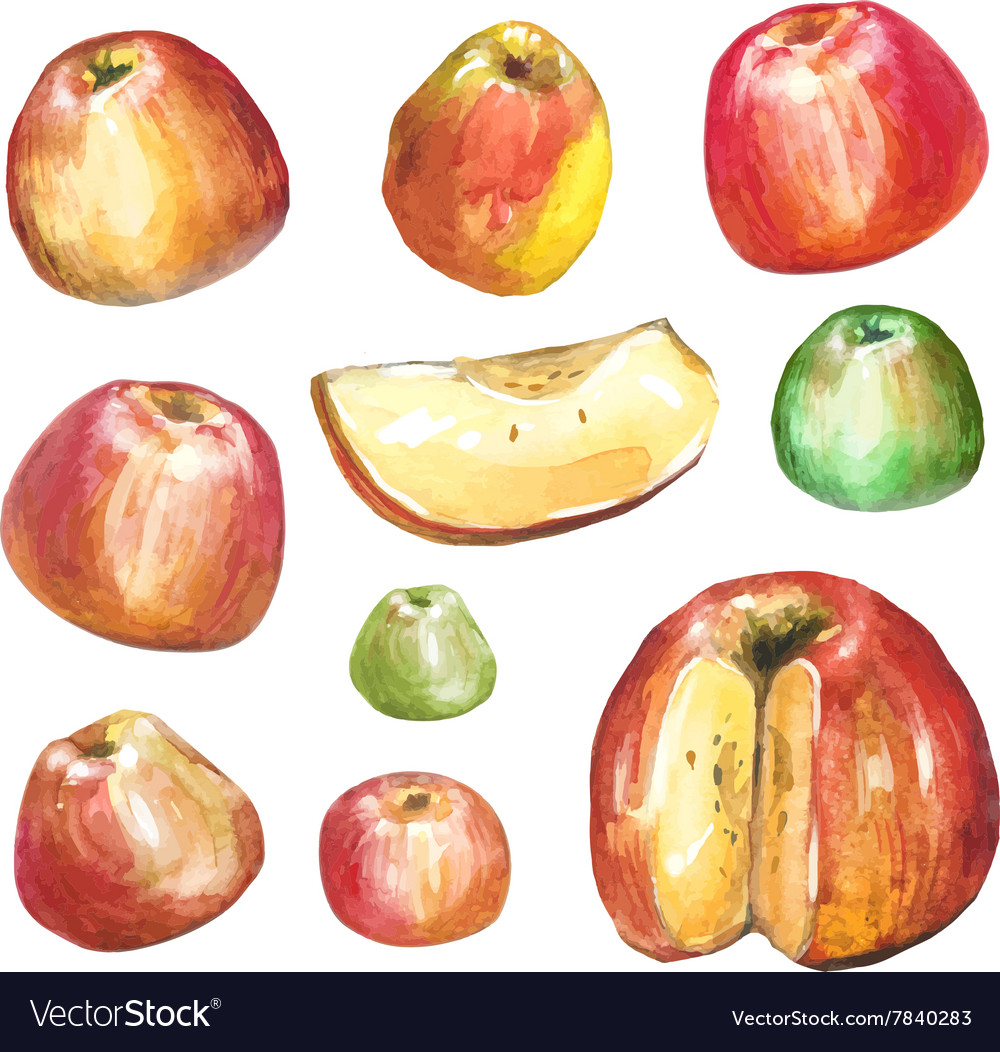 Apples painted with watercolors on white paper
