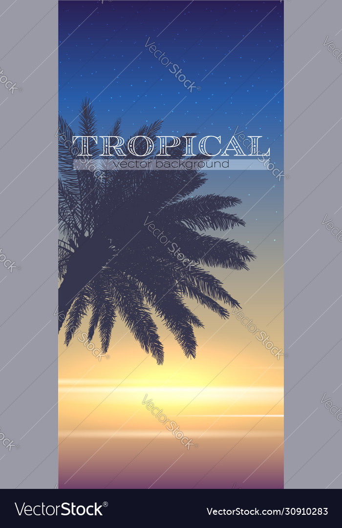 Summer tropical background palm tree on sunset