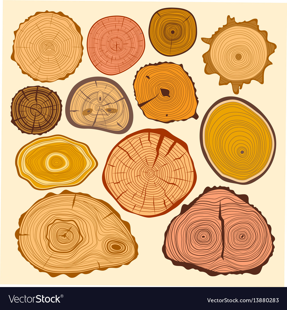 Wood slice texture tree circle cut raw material vector image