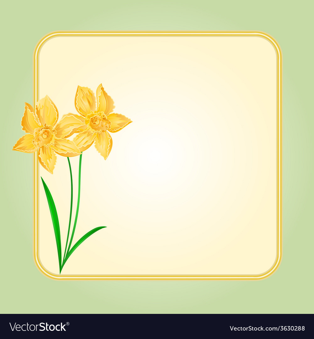 Daffodil spring flower background frame royalty free vector daffodil spring flower background frame vector image mightylinksfo